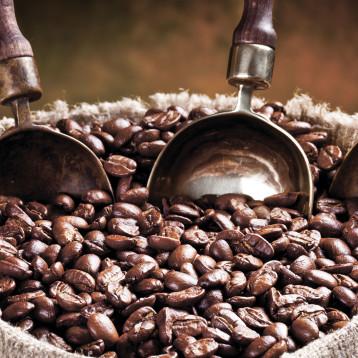 Caffè, specie coltivate e importanza della coltivazione