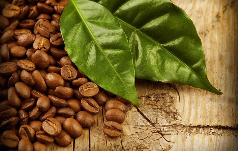 Come si coltiva il caffè?